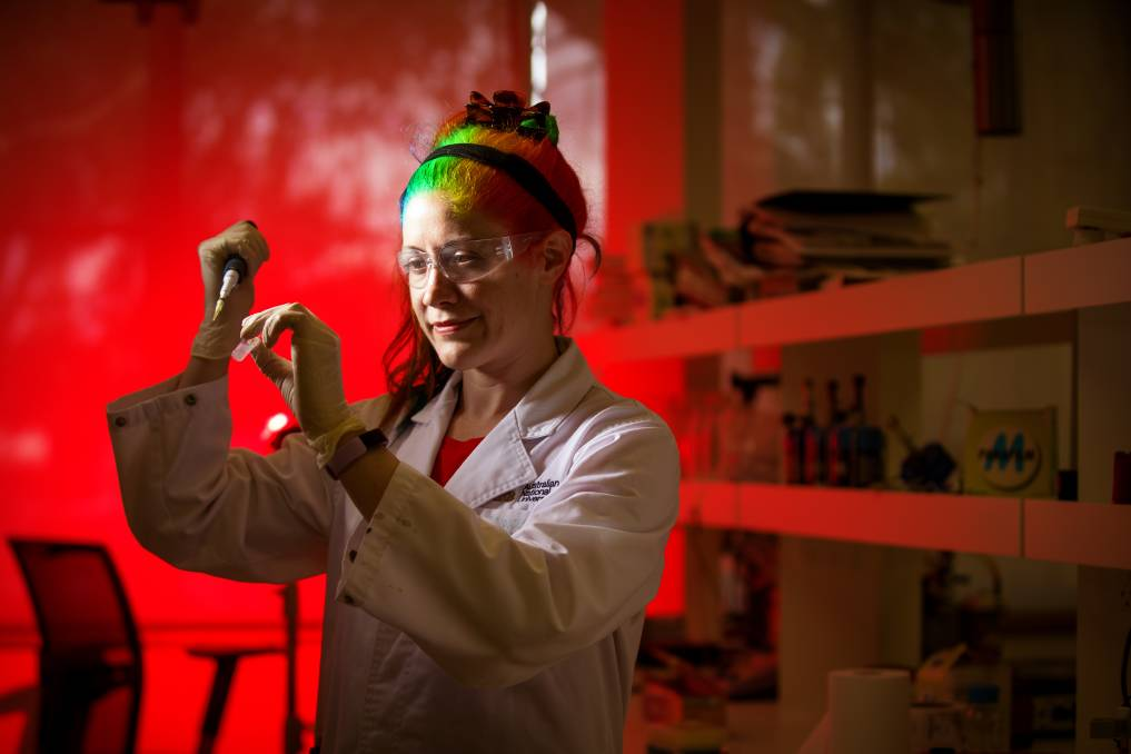 Dr Kiara Bruggeman works with nanotechnology to create an environment where stem cells can be encouraged to replace damaged cells after a stroke. Picture: Sitthixay Ditthavong