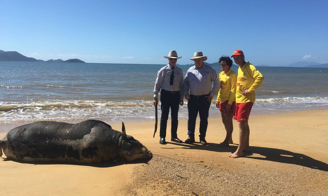 Bob Katter MP, Shane Knuth MP, with Mission Beach Surf Life Saving Club members Dyana Brown and Shane Gee with the cow carcass. Photo credit – Anne Pleash.