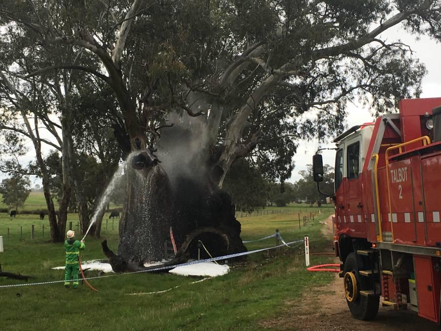 Ein FFMV-Feuerwehrmann sprüht am Freitagmorgen Wasser auf den Baum.  Bild: Caleb Cluff