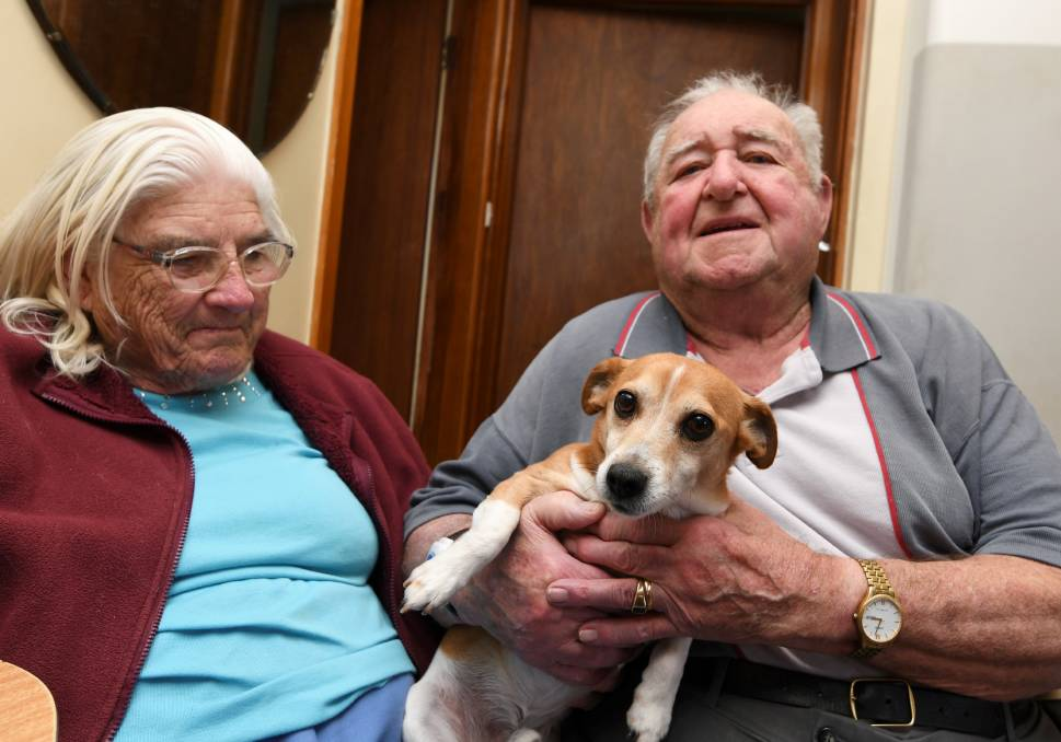 ATTACKED: Snoopy is on the mend following four hours of surgery and 44 stitches after being attacked in front of owners Gwen and Robert Thompson. Picture: Lachlan Bence
